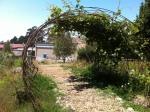 Rebar arch (Edible Schoolyard)