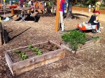 Beds can be little (Farm + Food Lab, Great Park, Irvine)