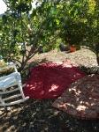Simple pleasures---sitting on blankets under shade trees (Williams Elementary, San Jose)