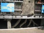 Places to hide! (Santa Barbara Zoo)