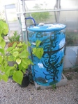 Painted rain barrels (Life Lab)