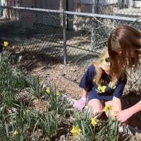 Daffodil show: win-win-win-win...